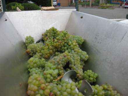Cedar River Cellars Crushing VNA Viognier